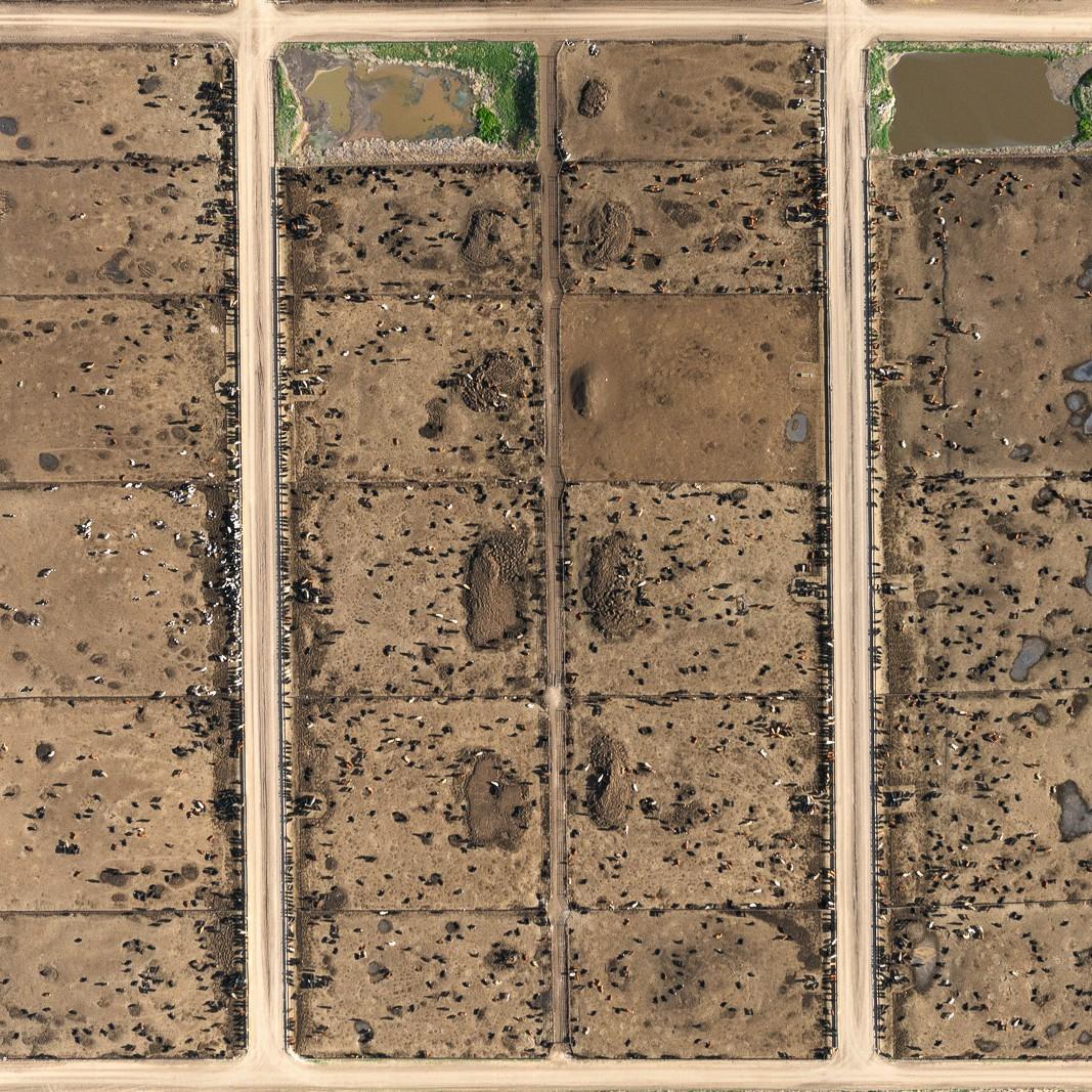 Cattle farm in Morrill, Nebraska