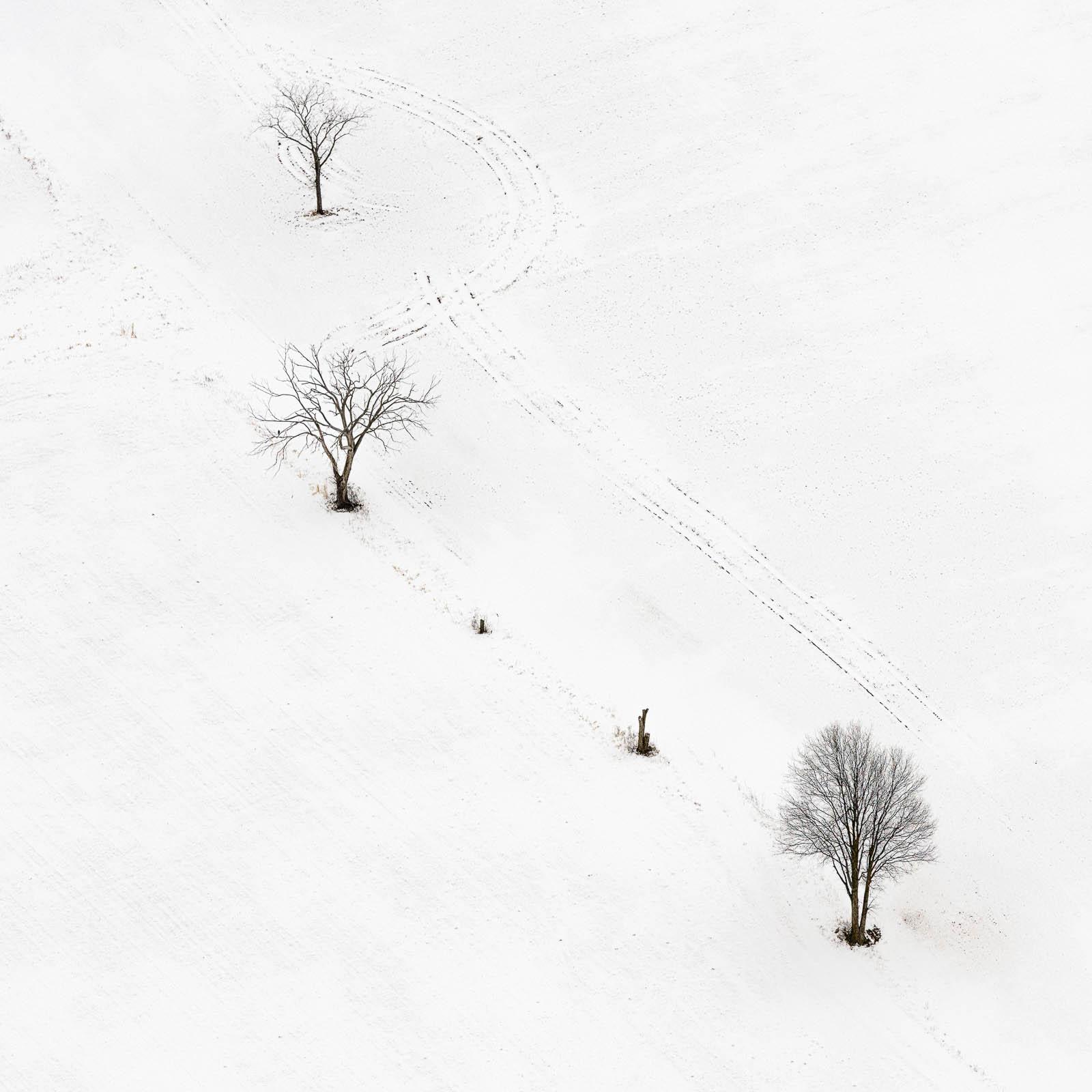 04 Three Trees
